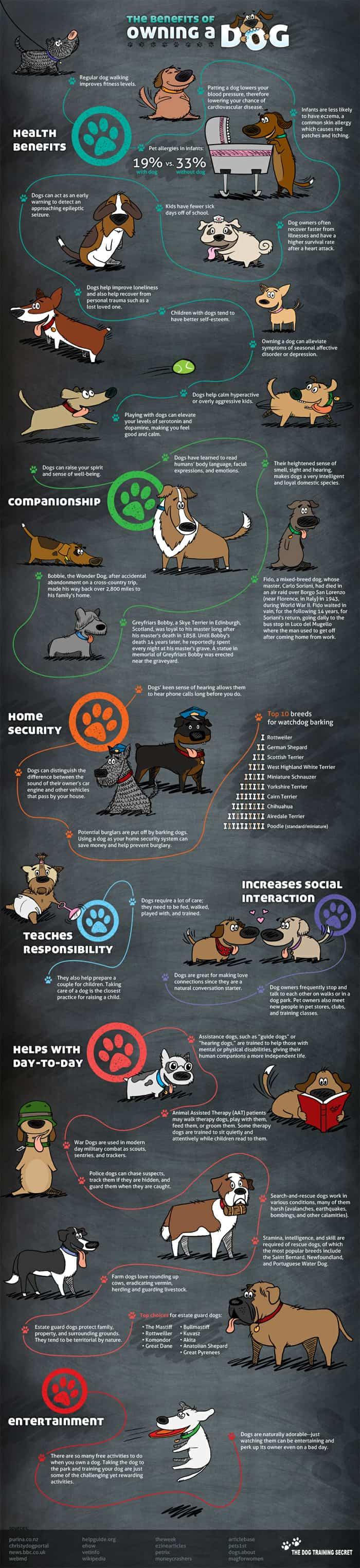 los beneficios de tener perro